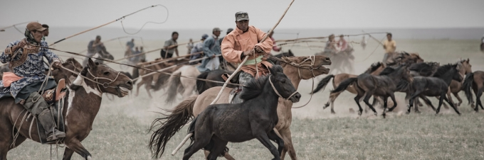 Horses Branded - Such a different festival of MongoljEn