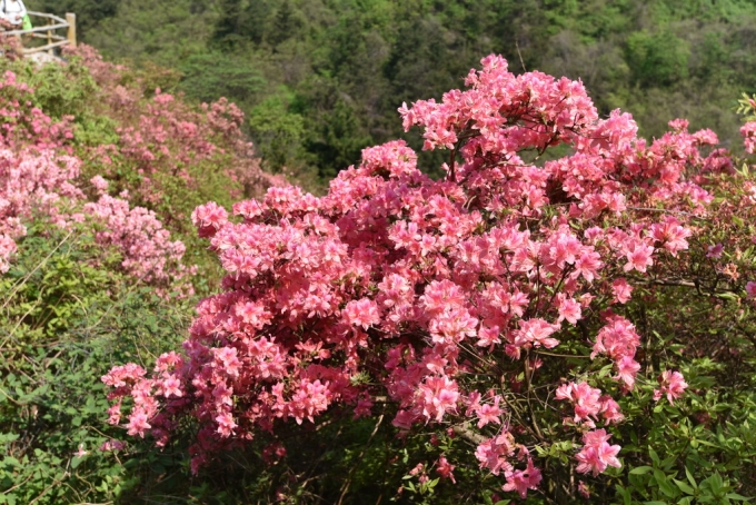 Beautiful flowers in Mulanshan Scenic Area