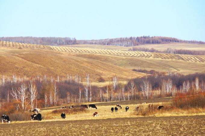 Hulunbeier Grassland