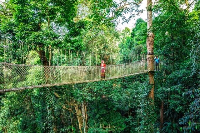 Xishuangbanna, the Yunnan tropical forest