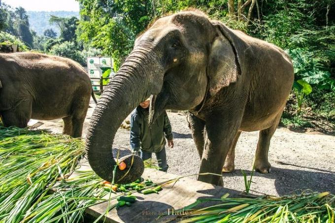 Yunnan Elephants
